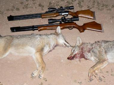 Predator Hunting with an Air Rifle | American Airgun Hunter
